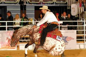 Scuola equitazione Western